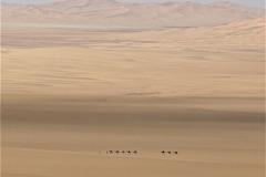 La caravane - © Didier Coccolo