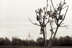 Hiver - ©Jean-Yves Briend