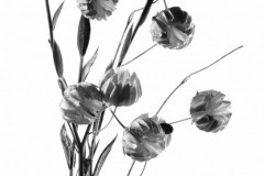 Fleurs - © Yves Chabrillat