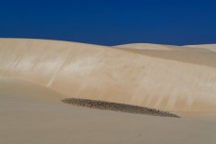 Cap Vert - © Yves Chabrillat